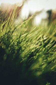 Grass, Green, Light, Sun, Wallpaper, Nature, Meadow