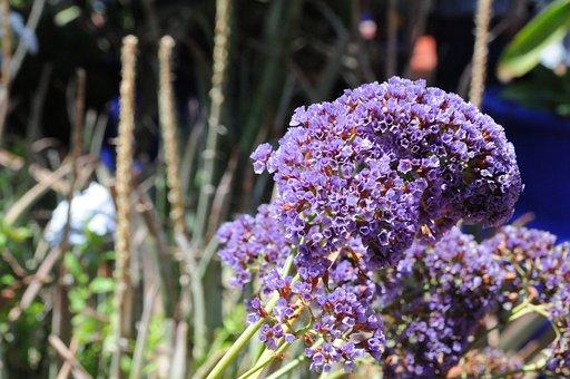 Flower, Marrakech, Morocco, Garden, Majorelle, Nature
