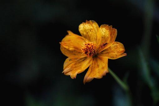 Yellow, Flower, Nature, Garden, Dark