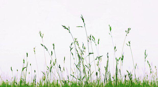 Meadow, Grass, Nature, Green, Summer, Blades Of Grass