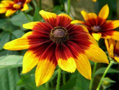 Flower, Yellow, Garden, Nature, Closeup, Plant