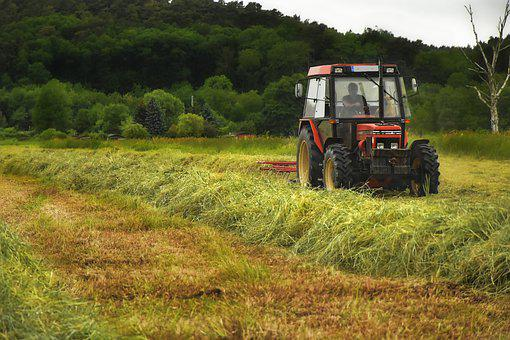 Hay, Tractor, Tractors, Mower, Mow, Meadow, Pasture