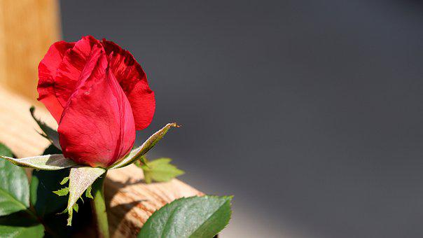 Background Image, Rose, Romance, Red, Floral Greeting