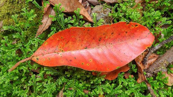 Leaf, Red, Autumn, Nature, Color, Fall, Season, Summer