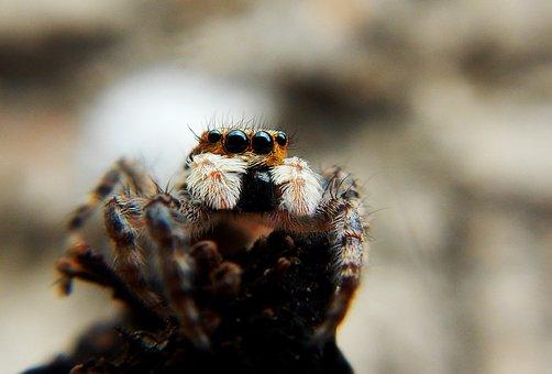 Spider, Web, Tarantula, Trap, Arachnid, Dangerous