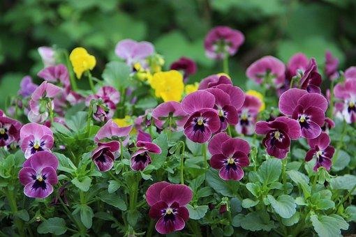 Flowers, Flower, Spring, Summer, Nature, Bloom, Pink
