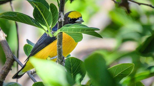 Bird, Well-you-saw, Colorful, Tropical, Brazilian, Wild
