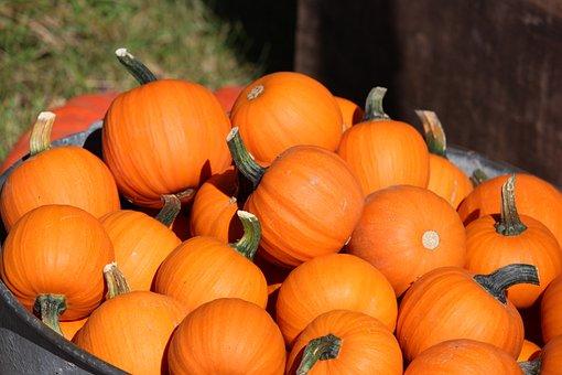 Pumpkin, Fall, Autumn, Orange, October, Thanksgiving