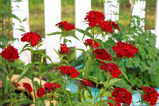 Flowers, Red, Background, Flower Bed, Flora, Flower