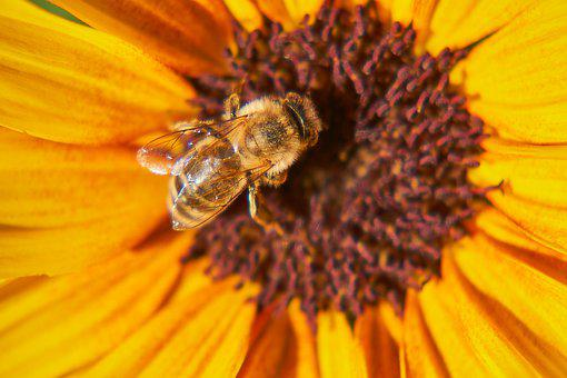Bee, Wasp, Insect, Pollination, Blossom, Bloom, Flower