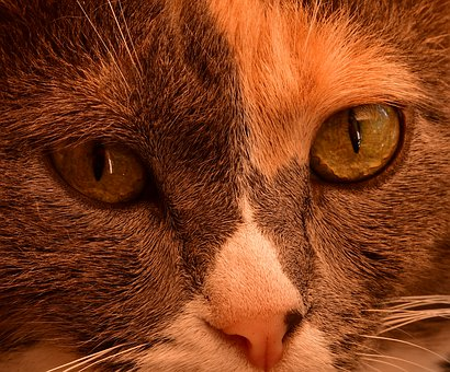 Cat, Eyes, First Floor, Portrait, Feline, Close, Animal