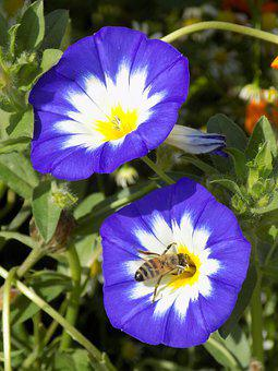 Blue, Flowers, Insect, Nature, Summer, Close Up, Bloom