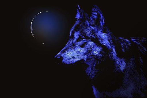 Wolf, Moon, Night, Blue, Composing, Moonlight, Darkness