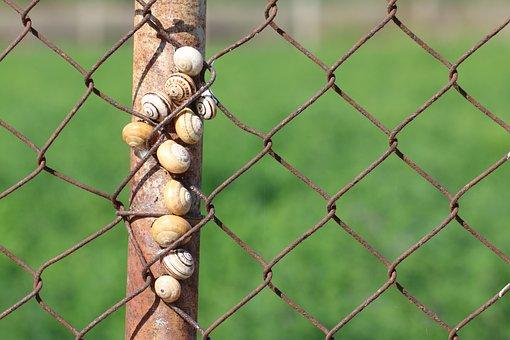 Snails, Gastropods, Fence, Post, Nature, Molluscs