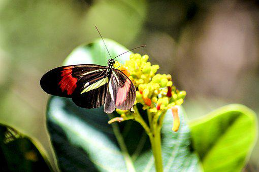Butterfly, Nature, Beauty, Insect, Animal, Flower