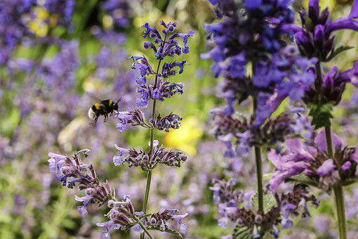 Bumblebee, Insect, Nature, Flower, Summer, Blossom
