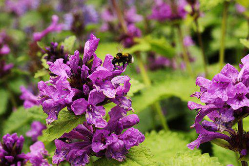 Flower, Bumblebee, Insect, Garden, Pollen, Summer