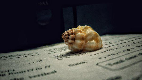 Shell, Book, Brown, Phone, Fun, Photography, Sea, Ocean
