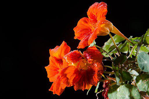 Flower, Rain, Plant, Nature, Spring, Garden, Rocio