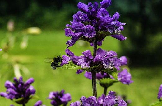 Flower, Bumblebee, Insect, Flying, Garden, Pollen