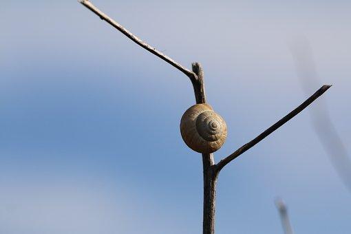 Snail, Gastropods, Nature, Molluscs, Garden, Shell