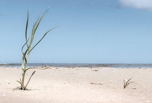 Marram Grass, Beach, Grass, Green, Blue, White, Sand