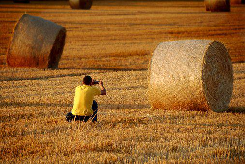 Hay Bales, Harvest, Field, Agriculture, Summer, Nature