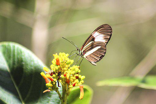 Butterfly, Nature, Flower, Insect, Animal, Fauna