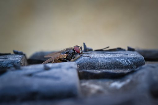 Moscow, Insect, Fly, Animal, Flies, Insects, Ala, Ali