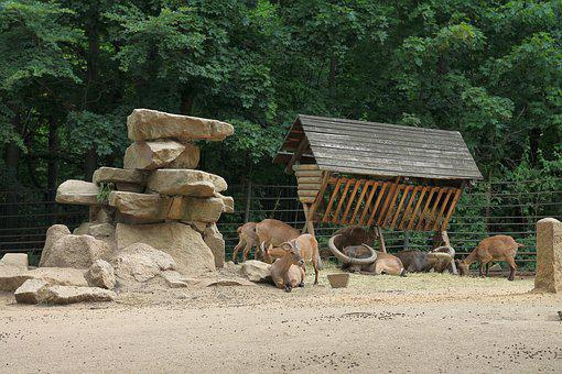 Herd, Krmelec, Animals, Nature