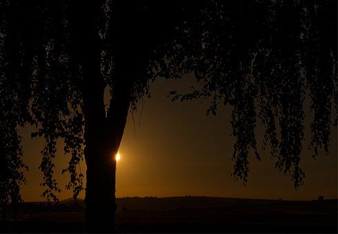 Sun, Dark, Tree, Landscape, Light, Sky, Nature, Sunrise