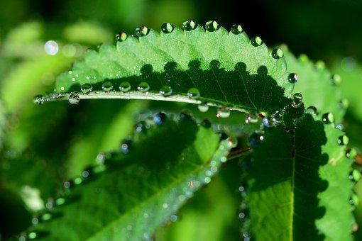 Leaf, Morgentau, Dewdrop, Close Up, Drop Of Water