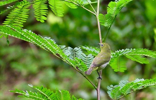 Bird, Birds, Natural, Fly, Pet, Wings, Ecology