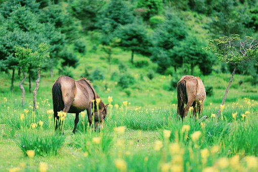 Horses, Grass, Nature, Countryside, Landscape, Animal