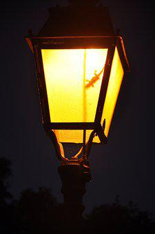 Lantern, Lighting, Evening, Lamp, Light, Night