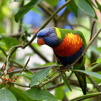 Parrot, Bird, Plumage, Colorful, Ara, Color, Animal
