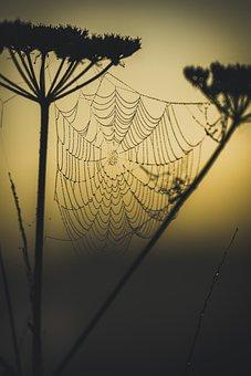 Cobweb, Shadow, Web, Spider, Nature, Close Up, Cobwebs