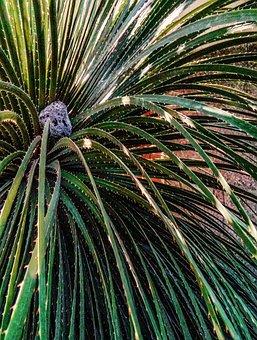 Palma, Shrub, Green, Stone, Palms, Garden, Hardness