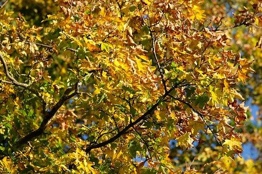 Autumn, Tree, Nature, Leaves