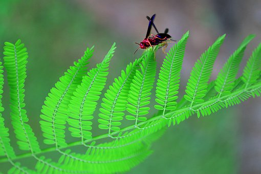 Bug, Insect, Wasp, Wildlife, Animal, Colorful, Green