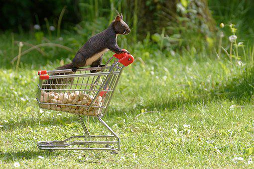 Squirrel, Shopping Cart, Nuts, Nager, Cute, Animal