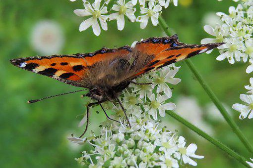 Nature, Animal World, Butterfly, Insect, Flower