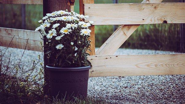 Daisies, Bloom, Summer, Rural, Farm, Animals, Fence