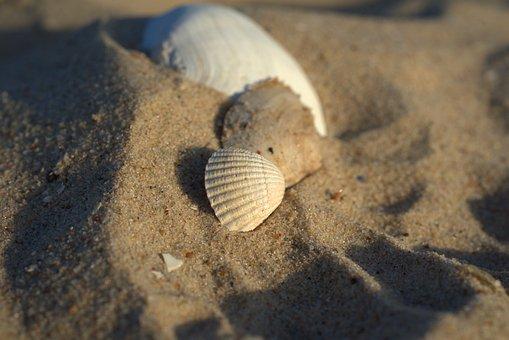 Beach, Sand, Shell, Summer, Holidays, Vacations, Sea