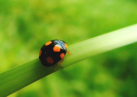 Ladybug, Insect, Nature, Beetle, Spring, Points, Leaf