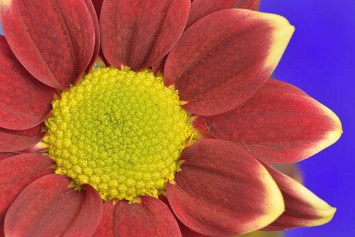 Flower, Red, Yellow, Bloom, Garden, Love, Nature