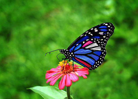Butterfly, Wing, Blue, Flower, Spring, Insects, Beauty