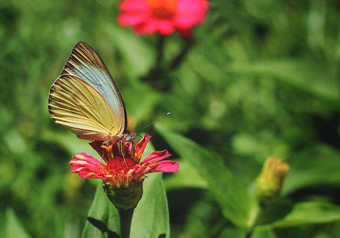 Butterfly, Wing, Insects, Spring, Nature, Flower