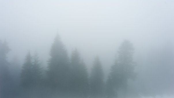 Fog, Trees, Canada, Nature, Landscape, Mysterious