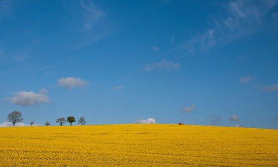 Spring, Blue Rape, Landscape, Sky, Agriculture, Clouds